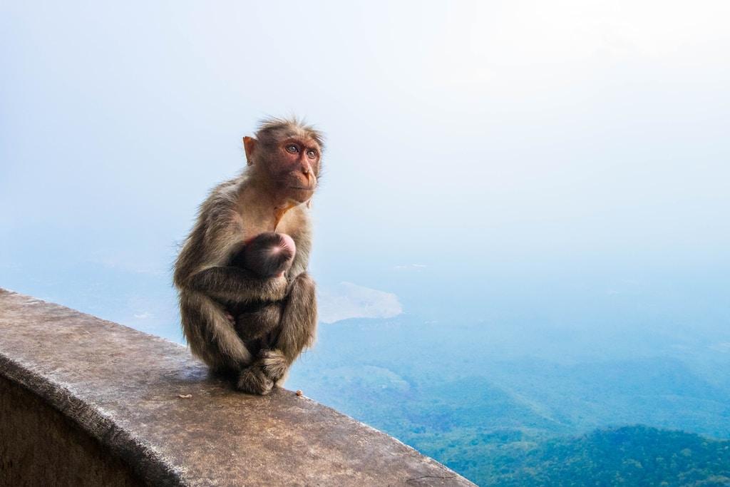 monkey sitting on edge of building