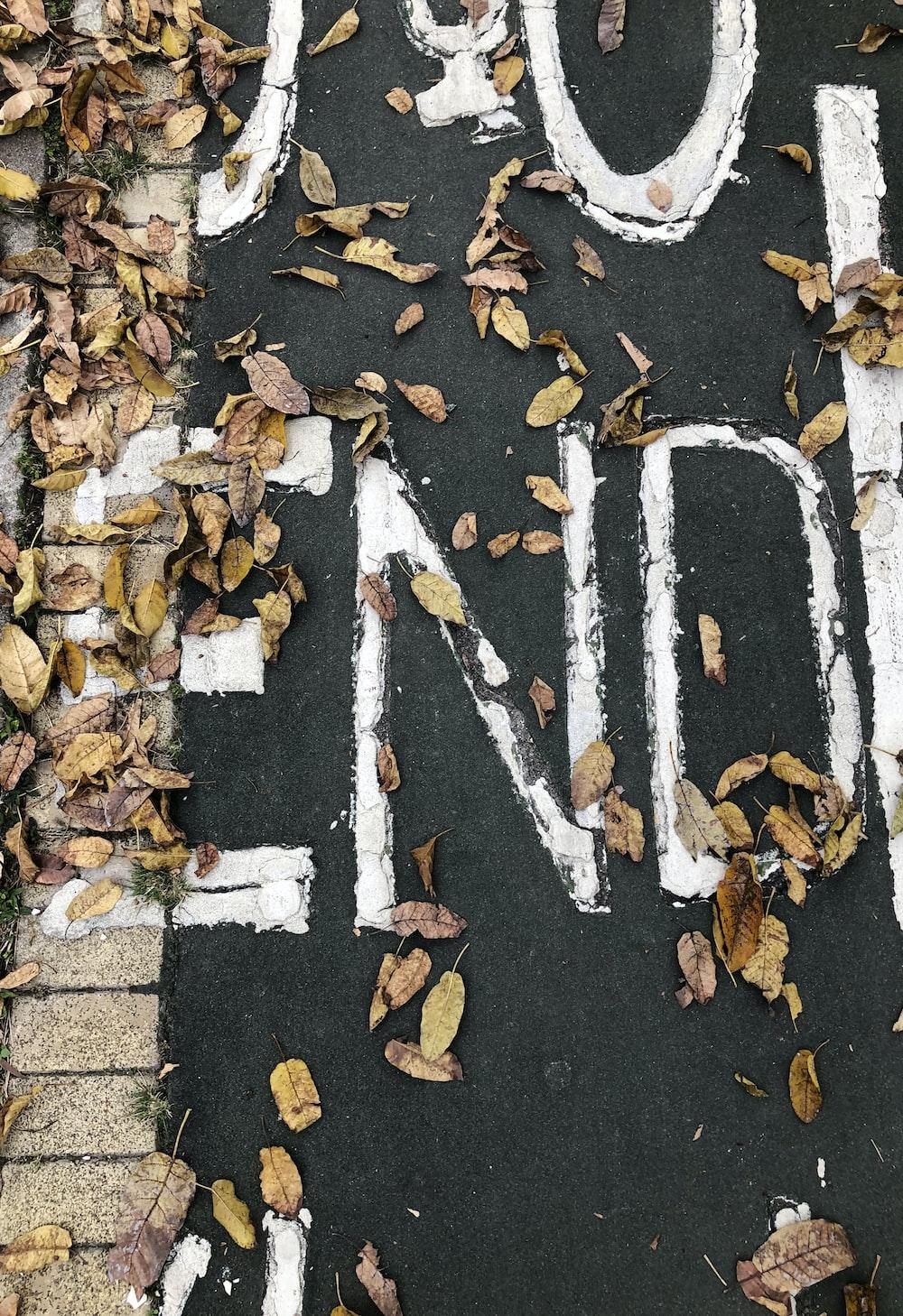 dry leaves on black concrete pavement