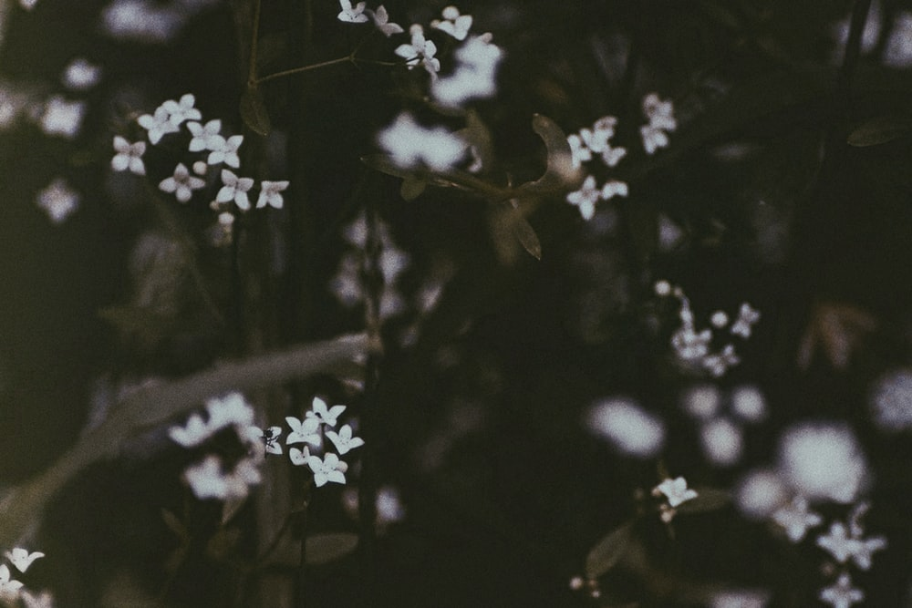 Small white flower pictures download free images on unsplash closeup photo of white petaled flower mightylinksfo