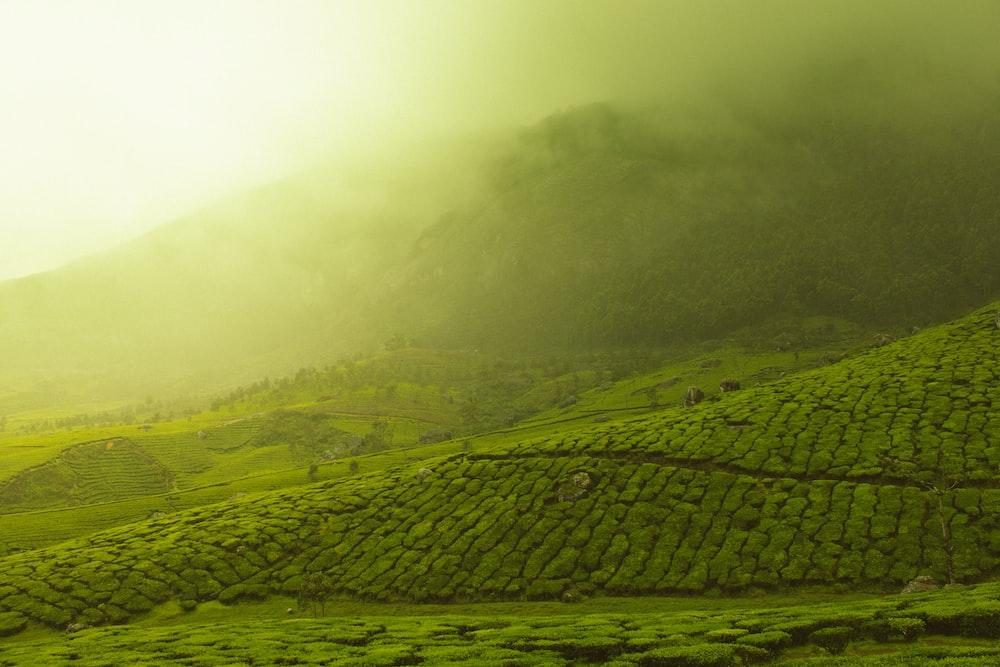 green grass field with smoke