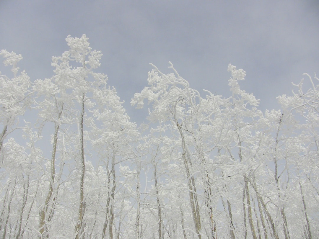 Another shot from a trip to Santa Fe after a big snow storm.
