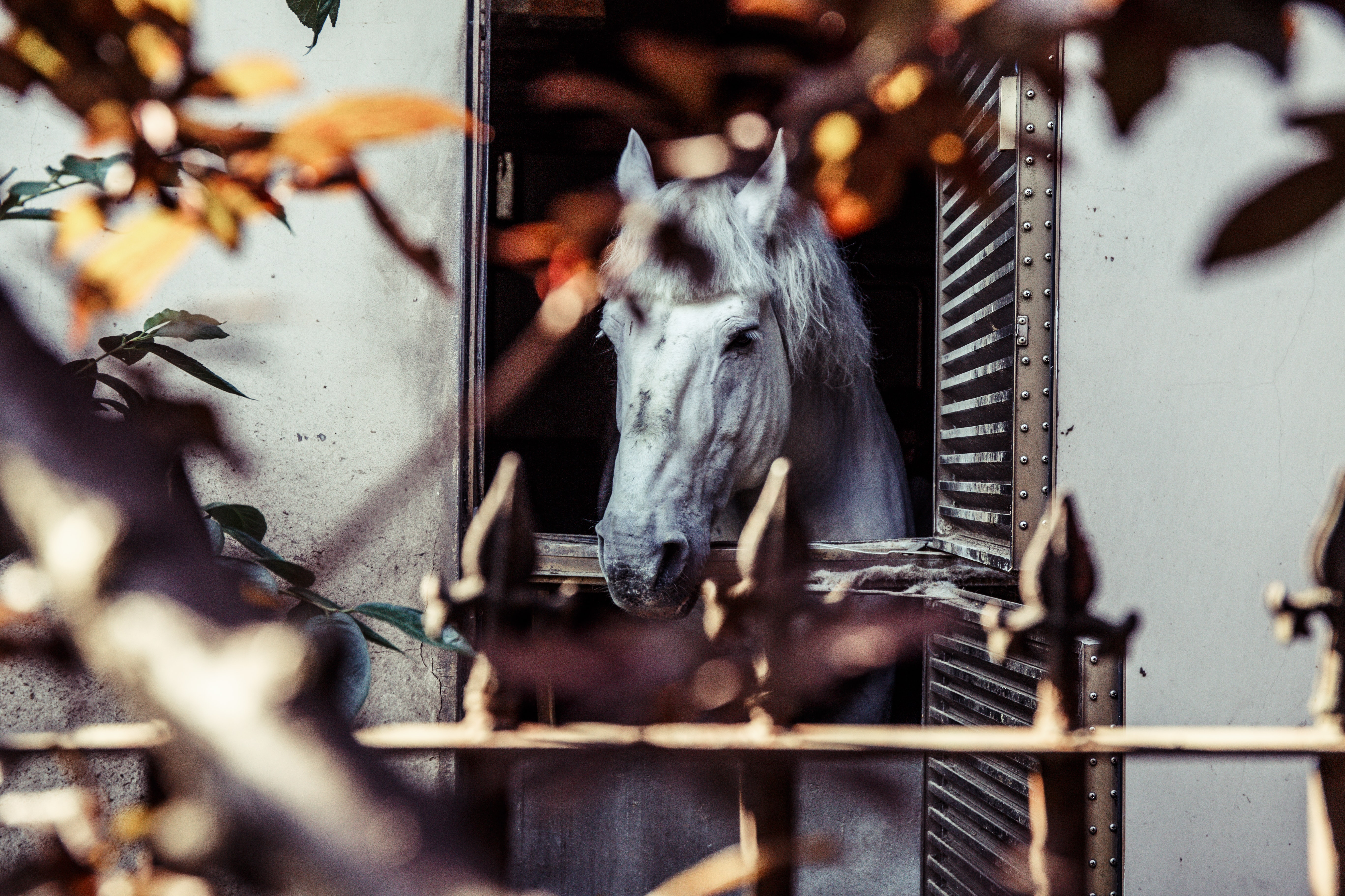 white horse on window with leaves