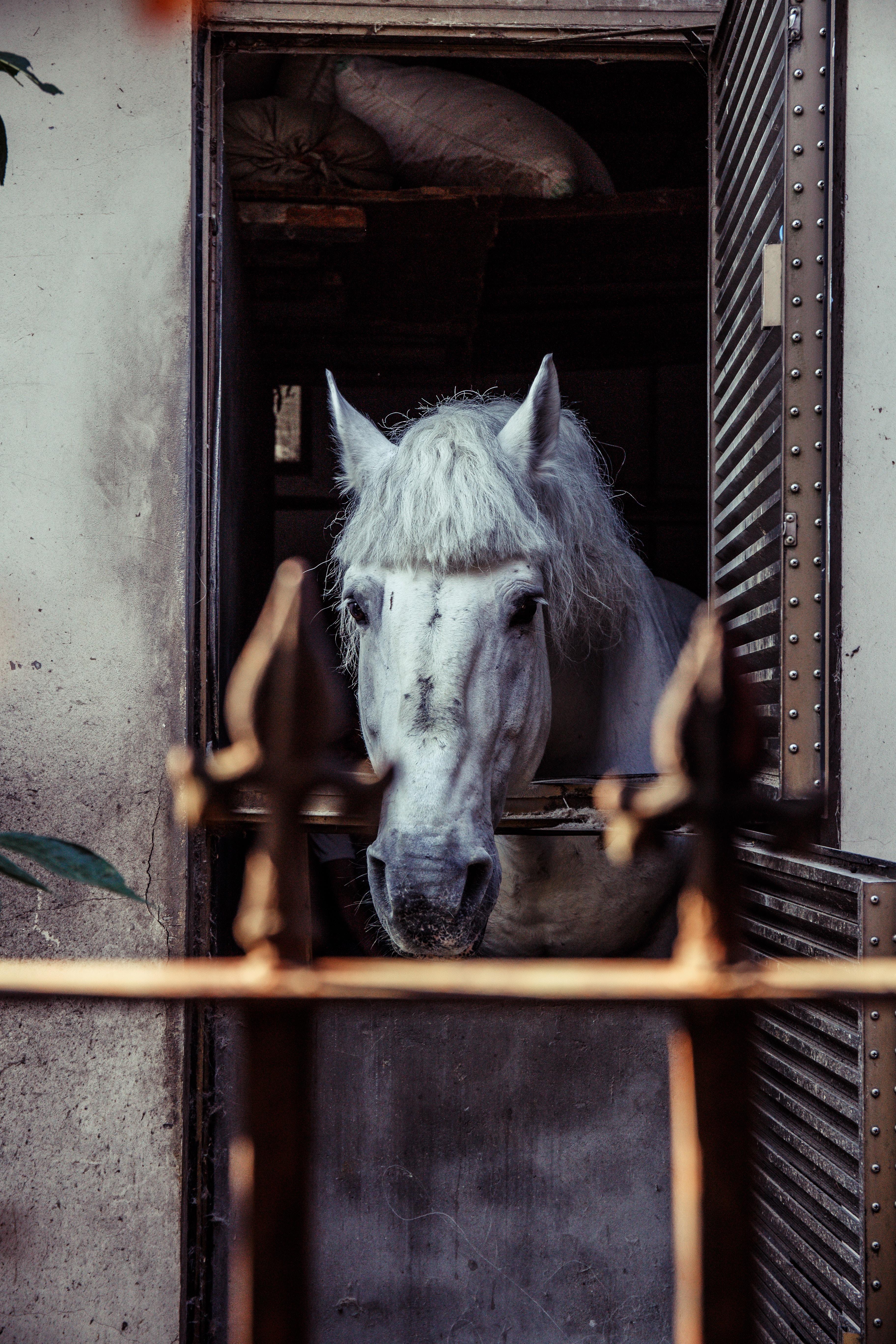 white horse peek on window
