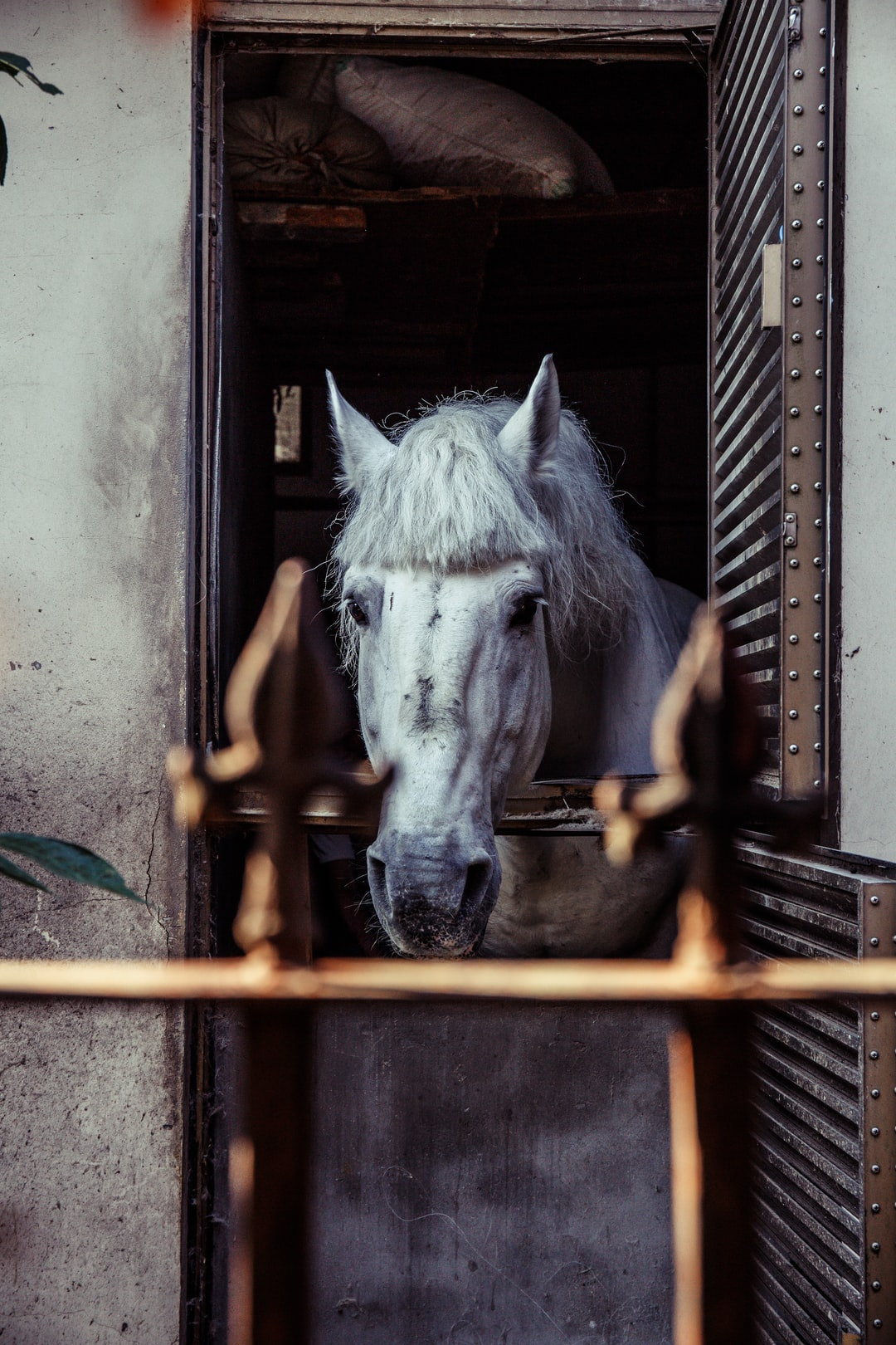 Horse in the cage