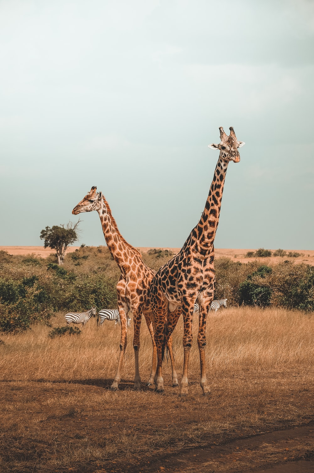 animal pictures hd download free images stock photos on unsplash