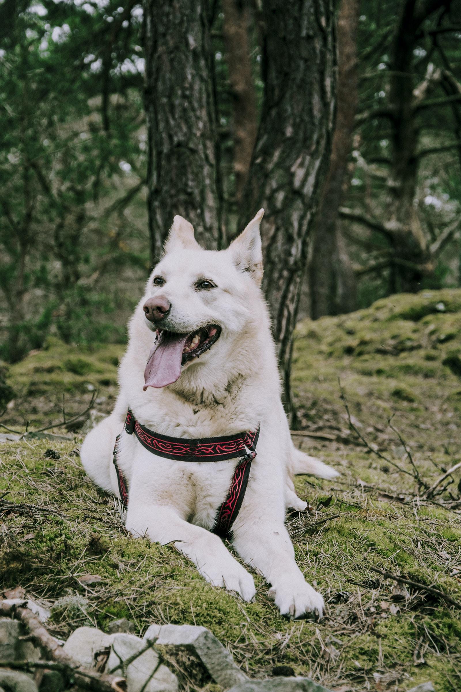 white dog on grass near trees
