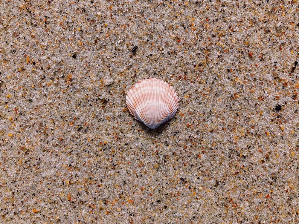 seashell on ground