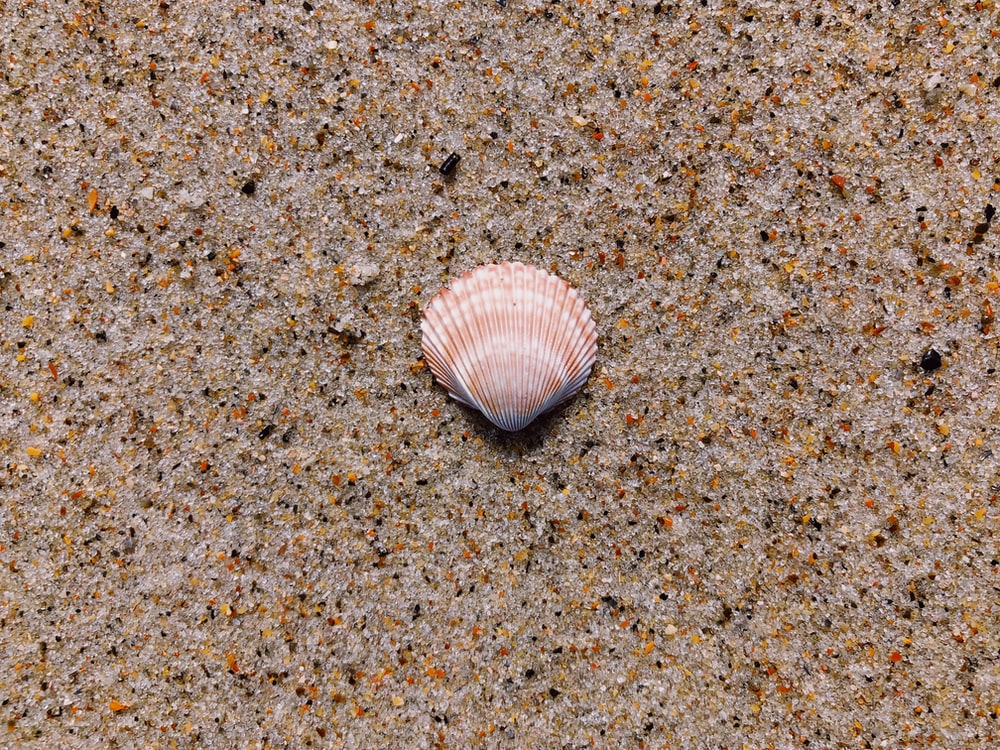 seashell on ground