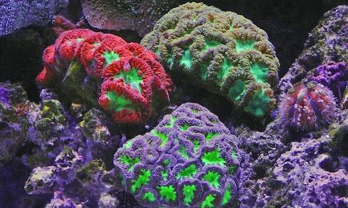 marine life pickup line