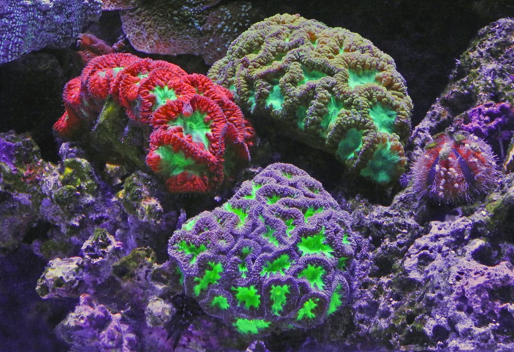 assorted-color coral reefs