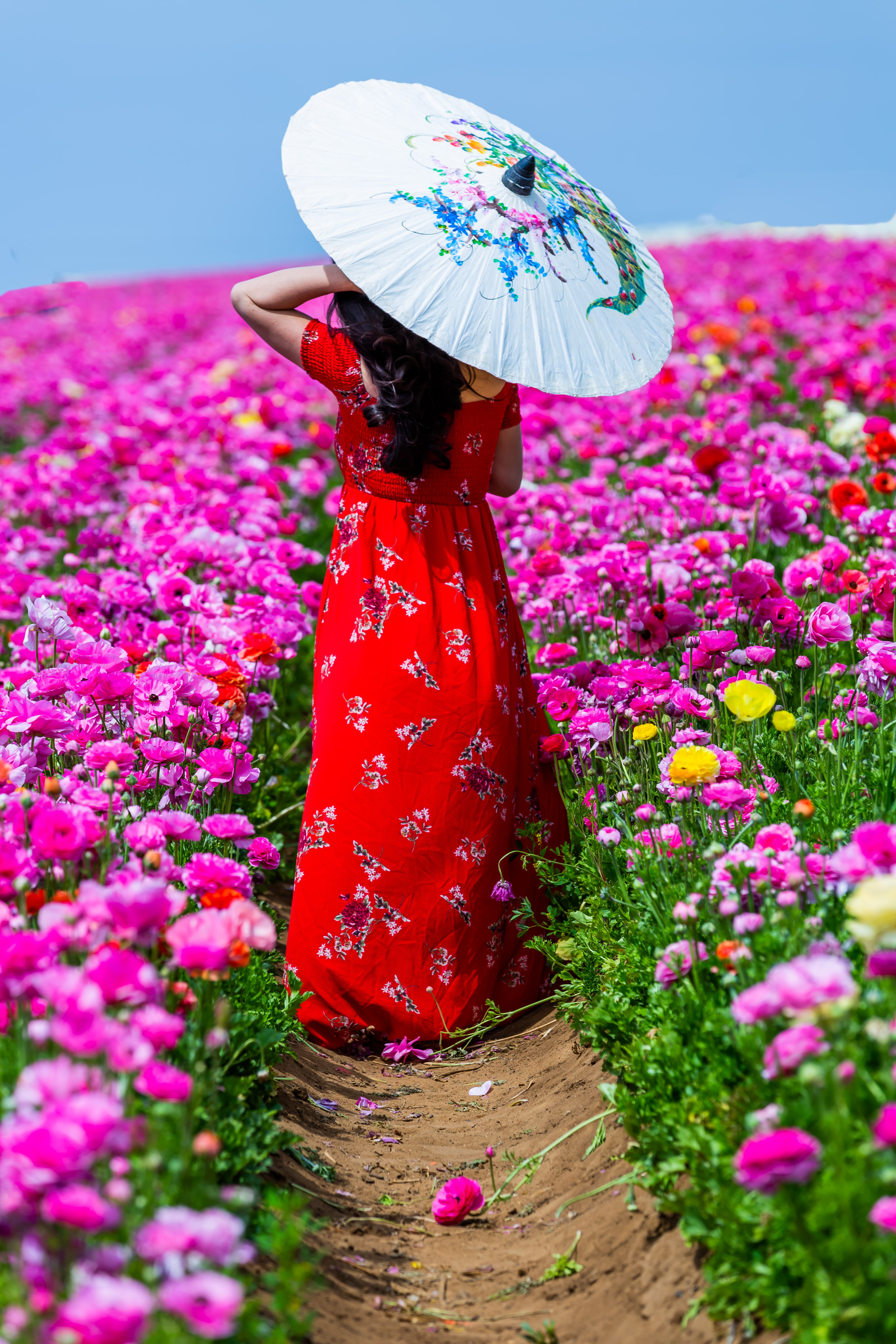woman walking along aisle of flower field while using oil paper umbrella