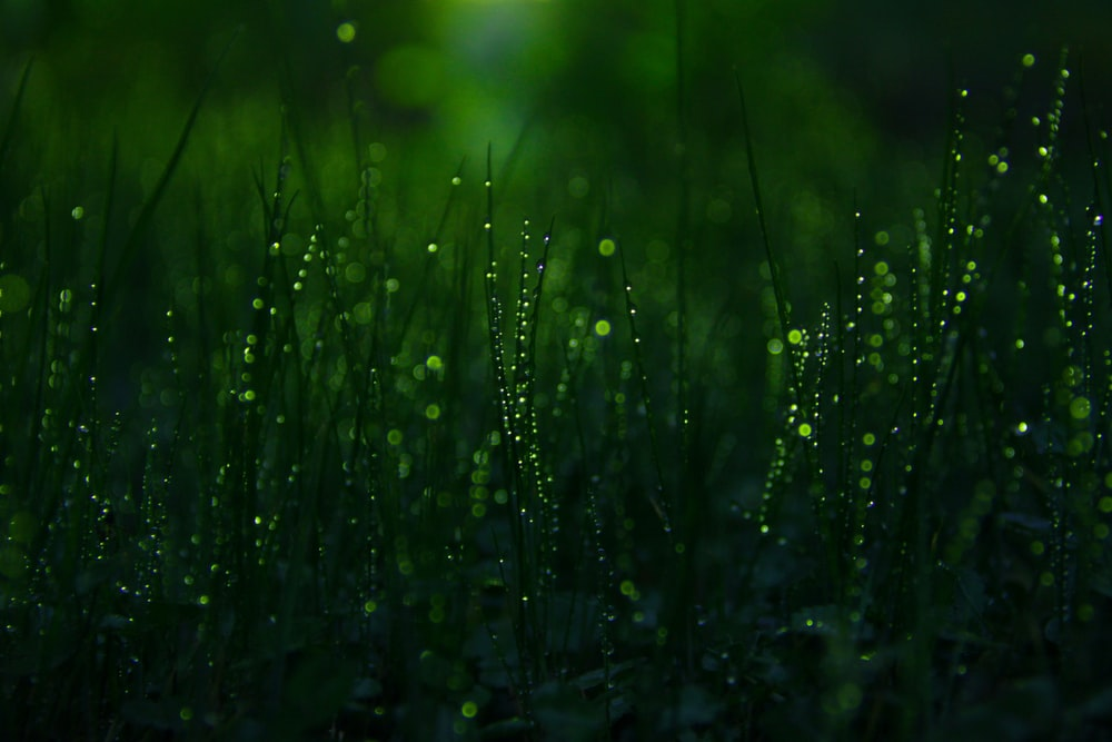 close-up photography of grasses