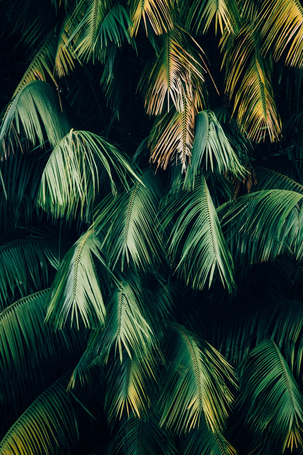 Tropical Leaf Pictures Download Free Images On Unsplash 1920 x 1080 jpeg 662 кб. tropical leaf pictures download free
