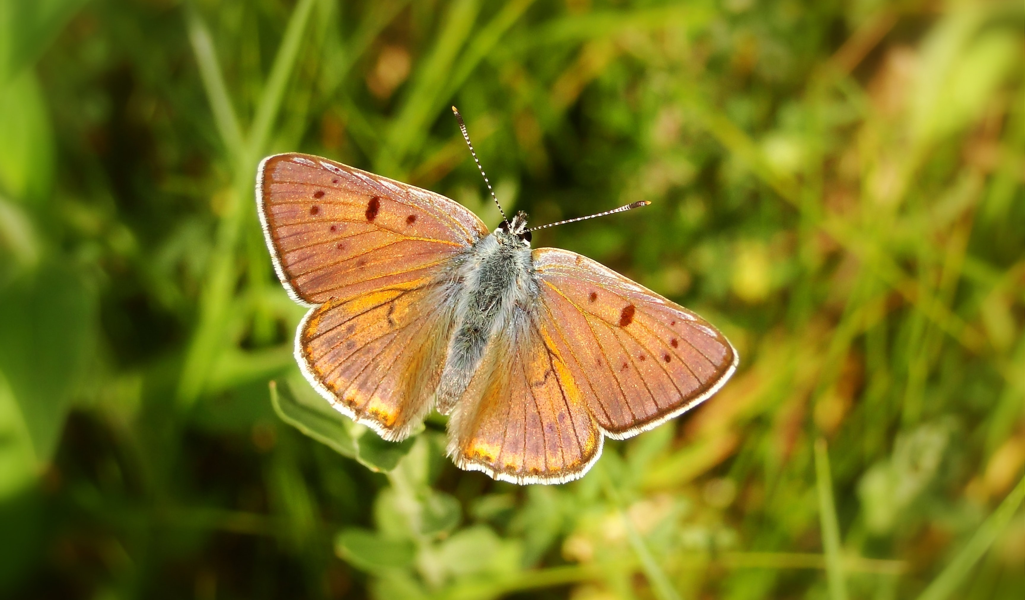 brown butterfly flying