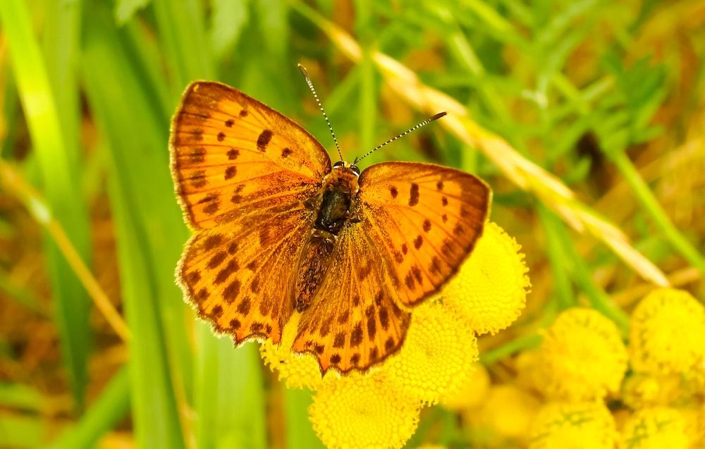 yellow moth on flower