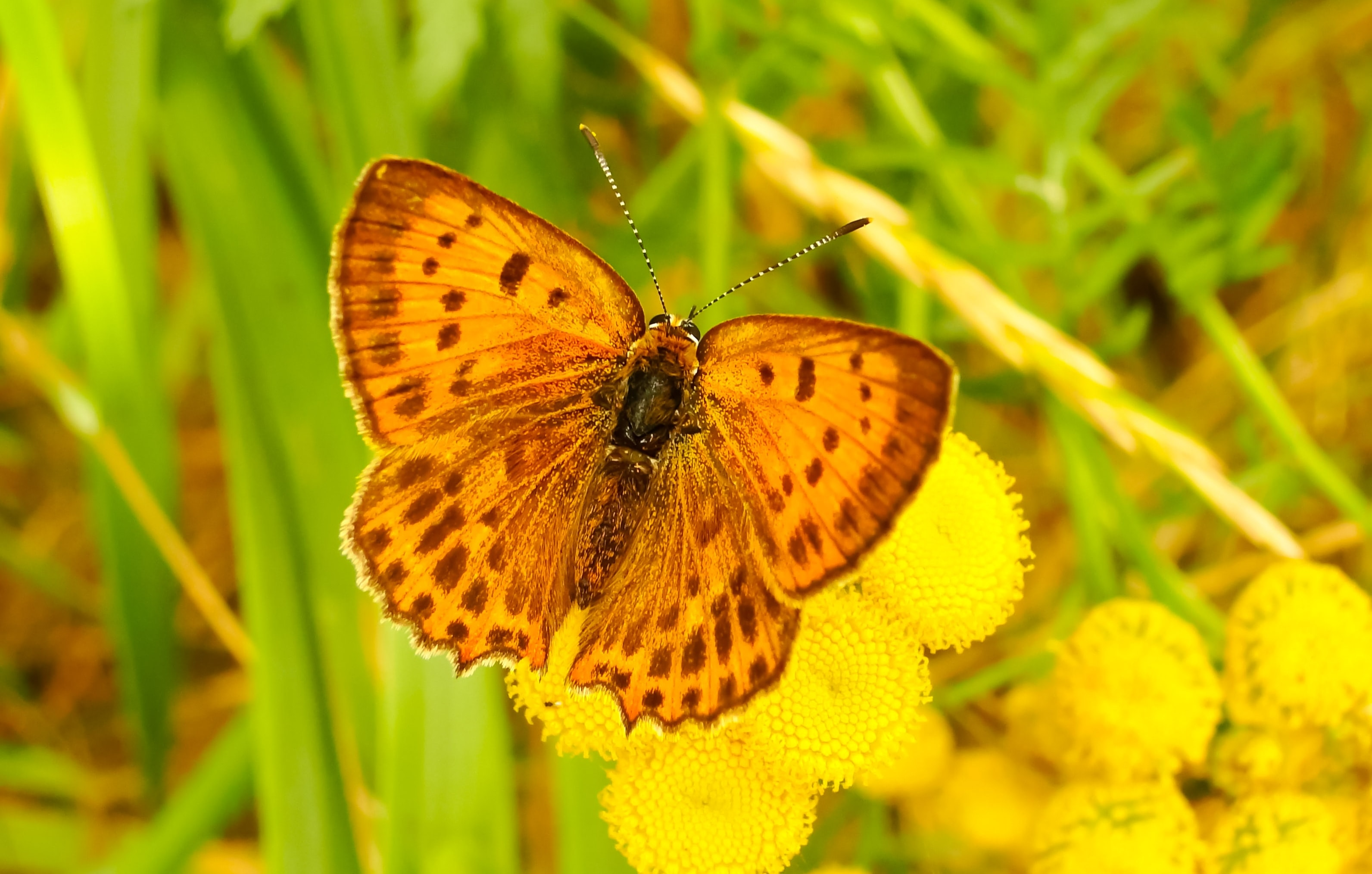 yellow moth on flower