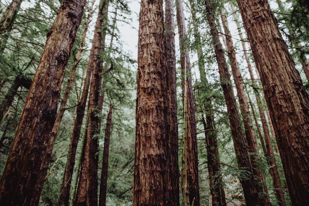 trees in the forest during daytime