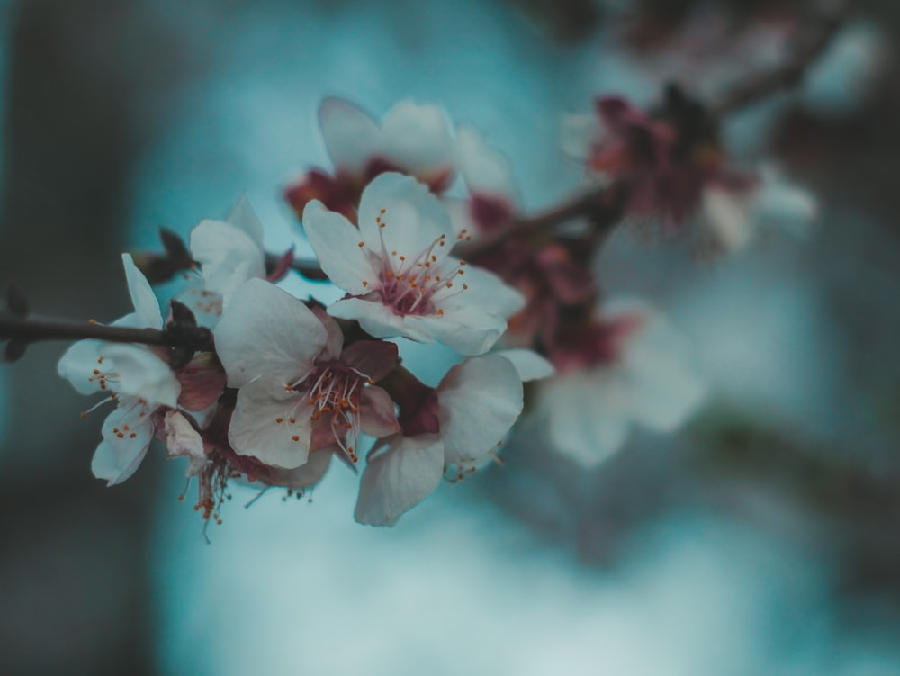 focused photo of a white petaled flowers
