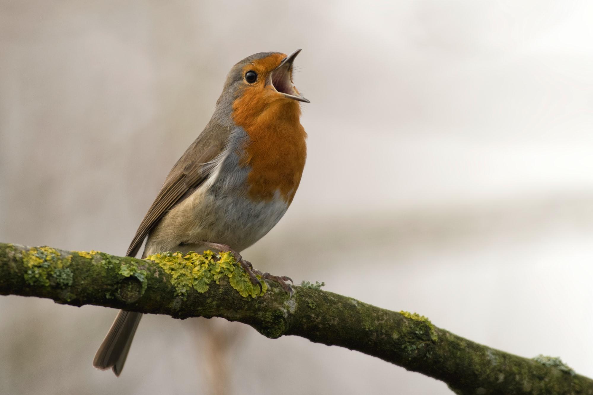 Yurdumuzun Sularında Yaşayan Ördeğe Benzer Bir Kuş Bulmaca Anlamı Nedir?