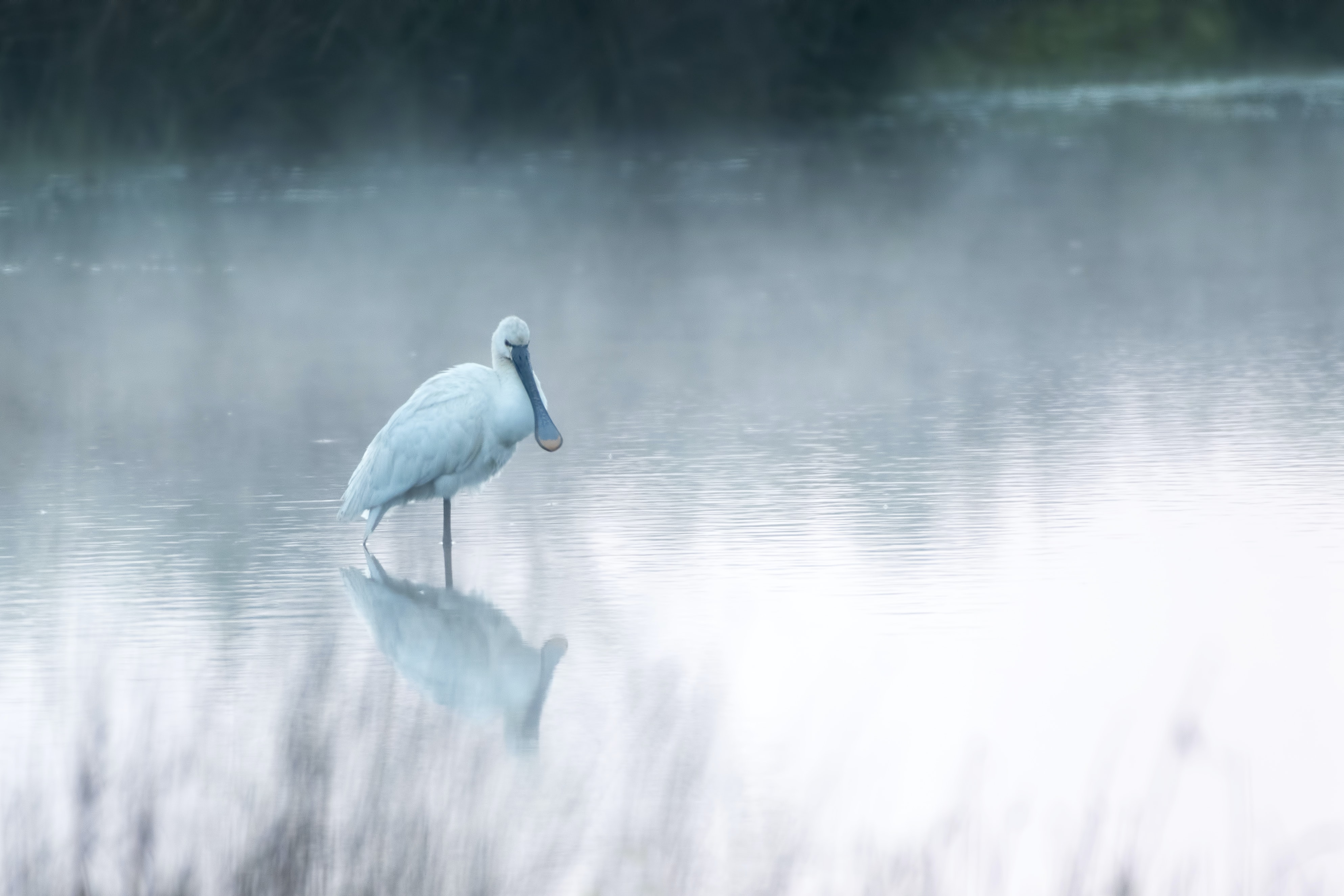bird walking on shallow body of water during daytime