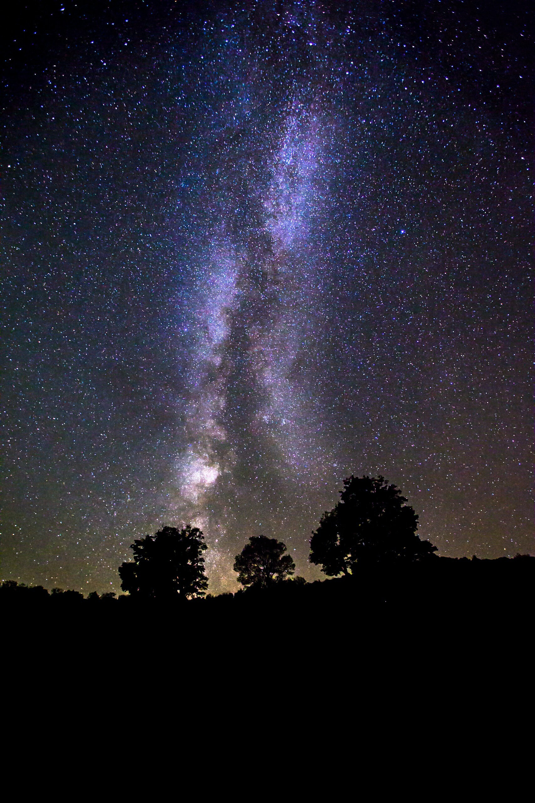 silhouette of trees under milky way galaxy