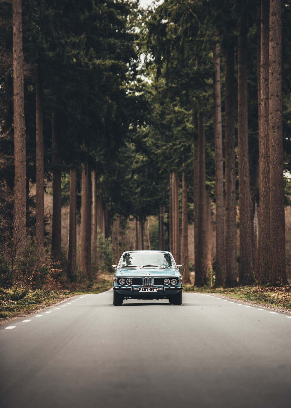 blue car near forest