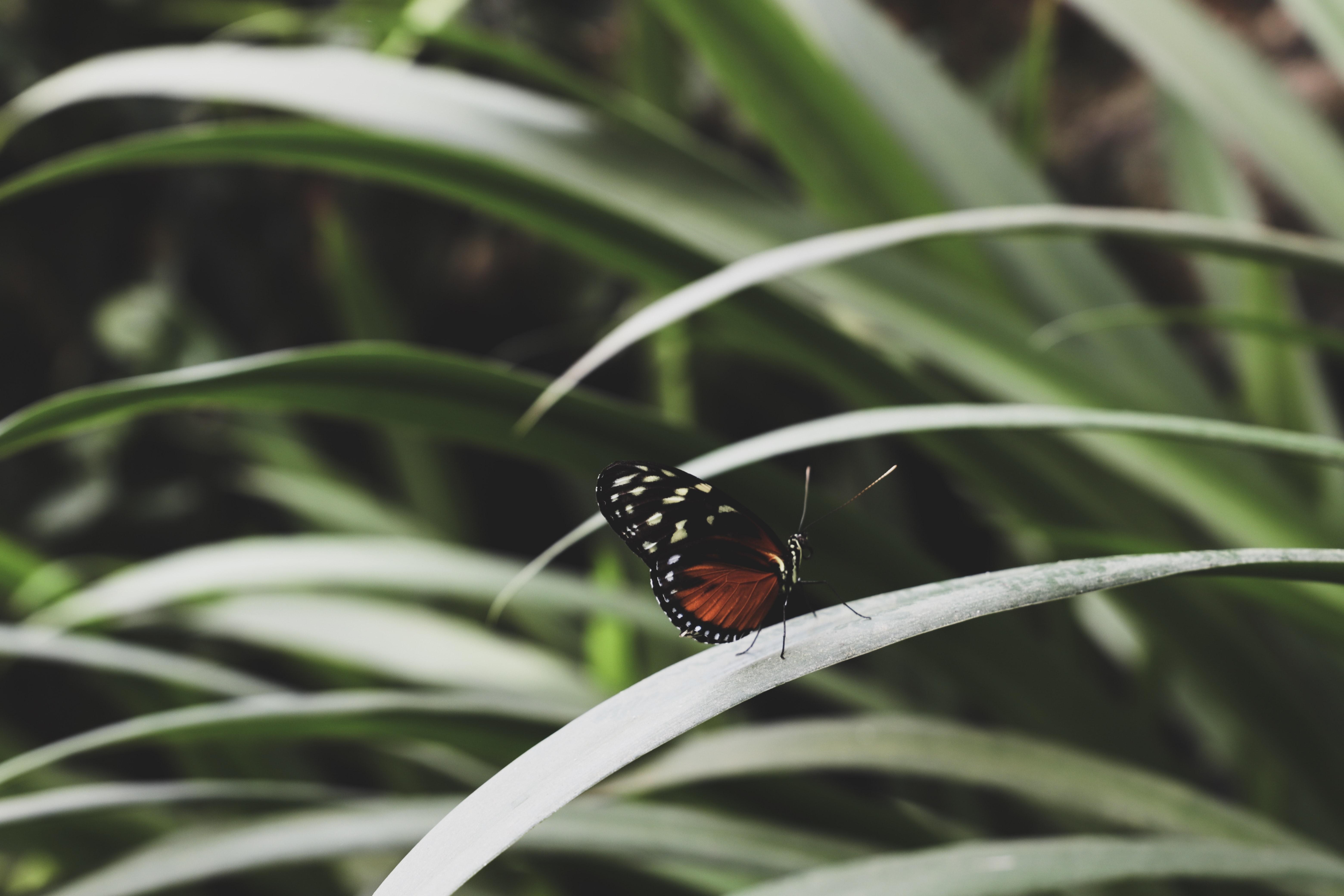 brown and black butterfly on leaf