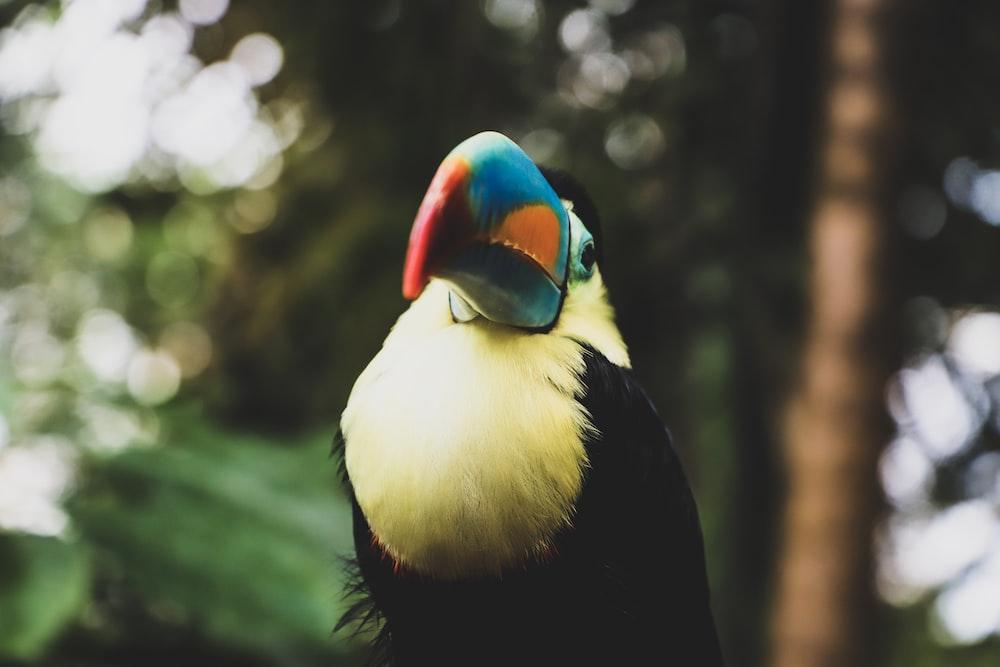 black, yellow, and blue bird