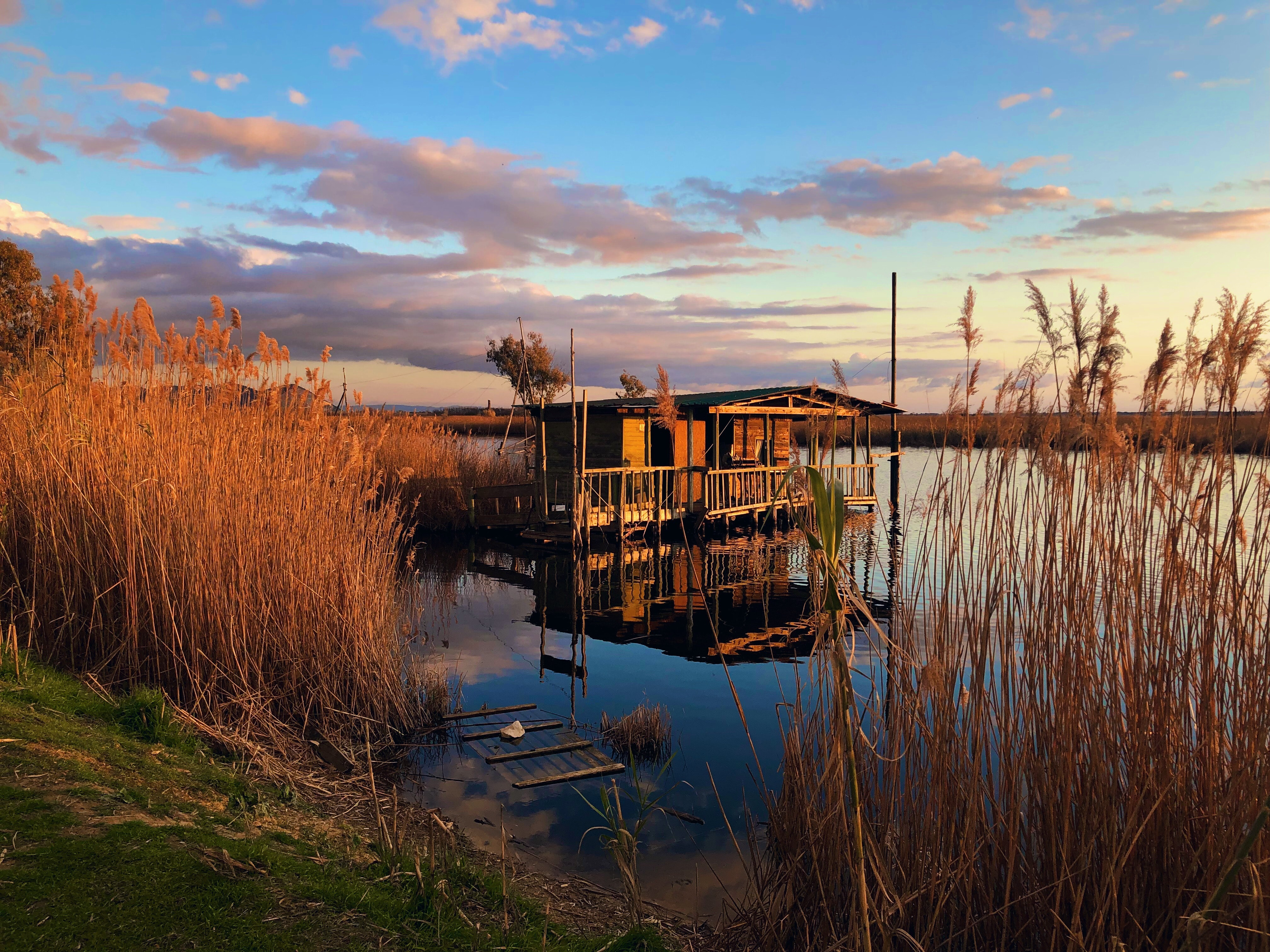 wooden house on body of water near grasses