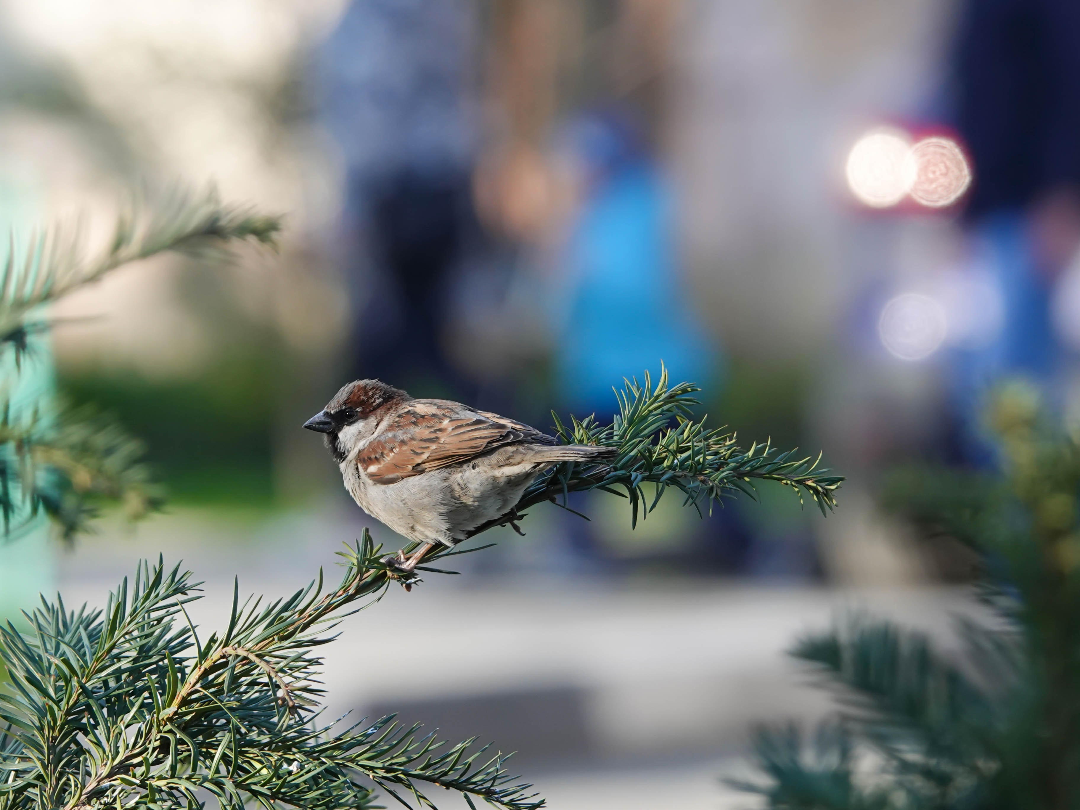 brown sparrow on tree branch