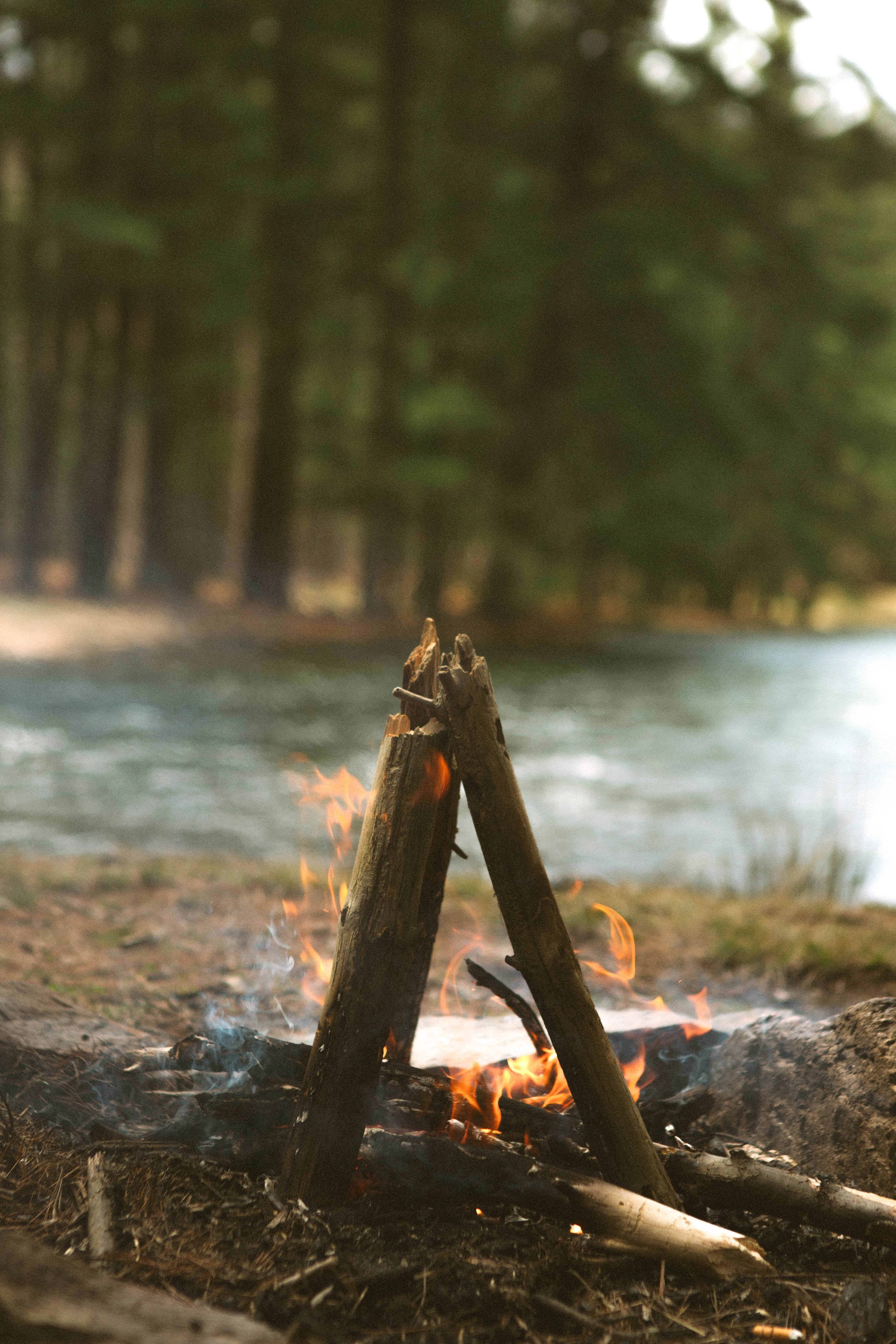 bonfire burning near body of water in a forest
