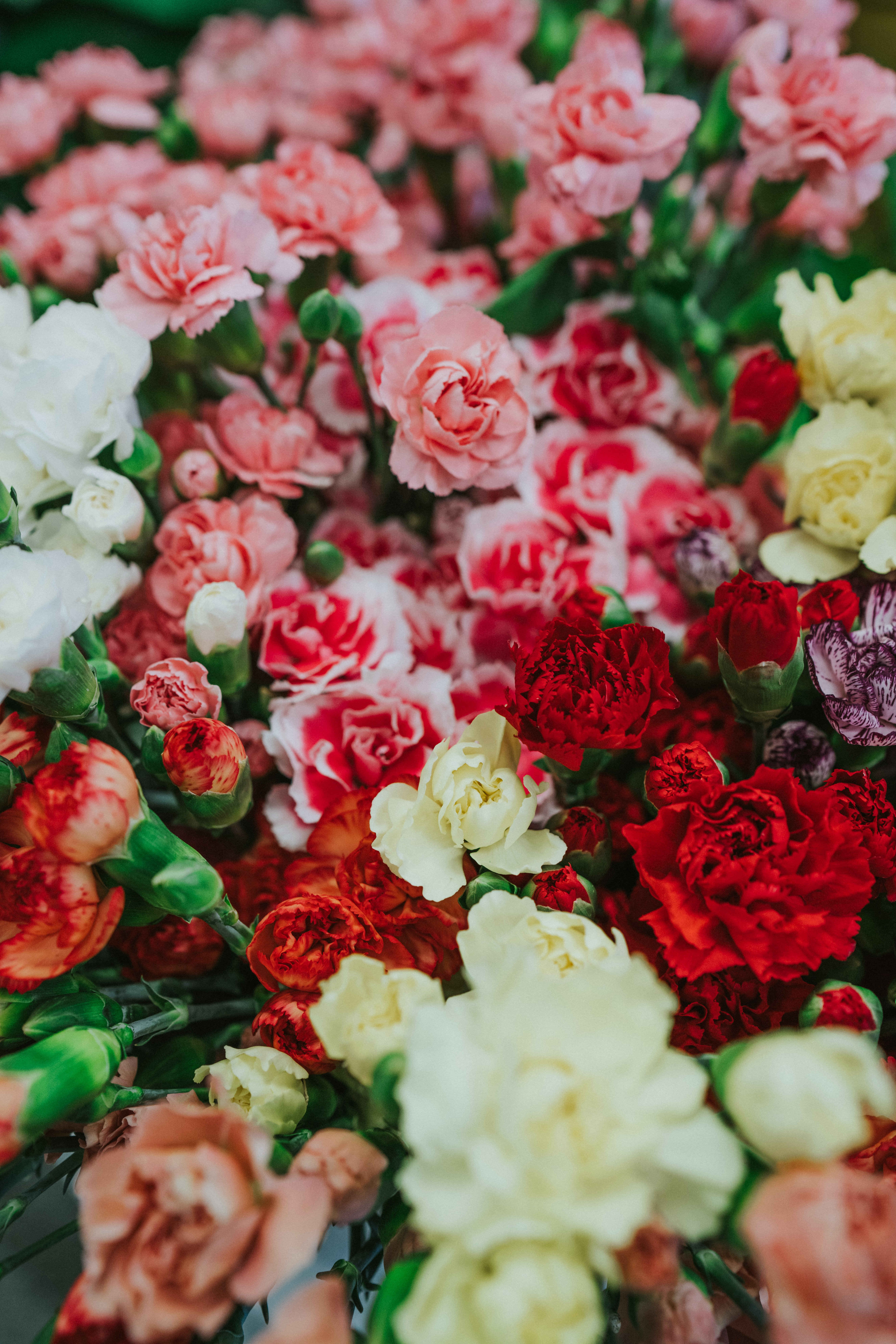 selective focus photography of assorted-color rose flowers