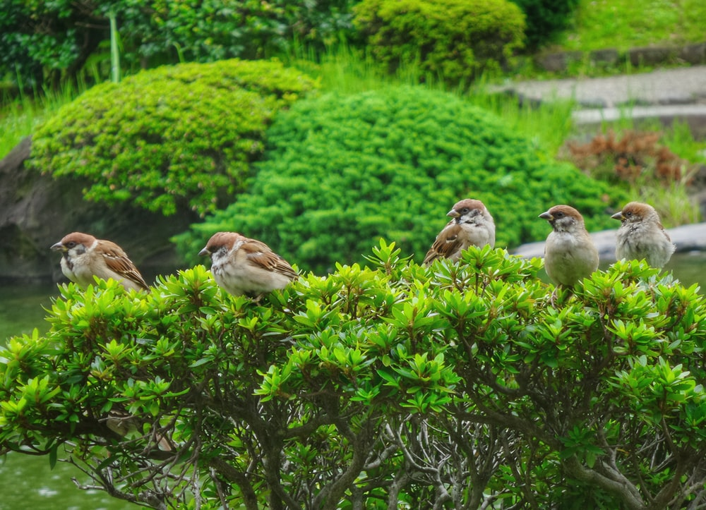 five brown birds on top of green plant during daytime