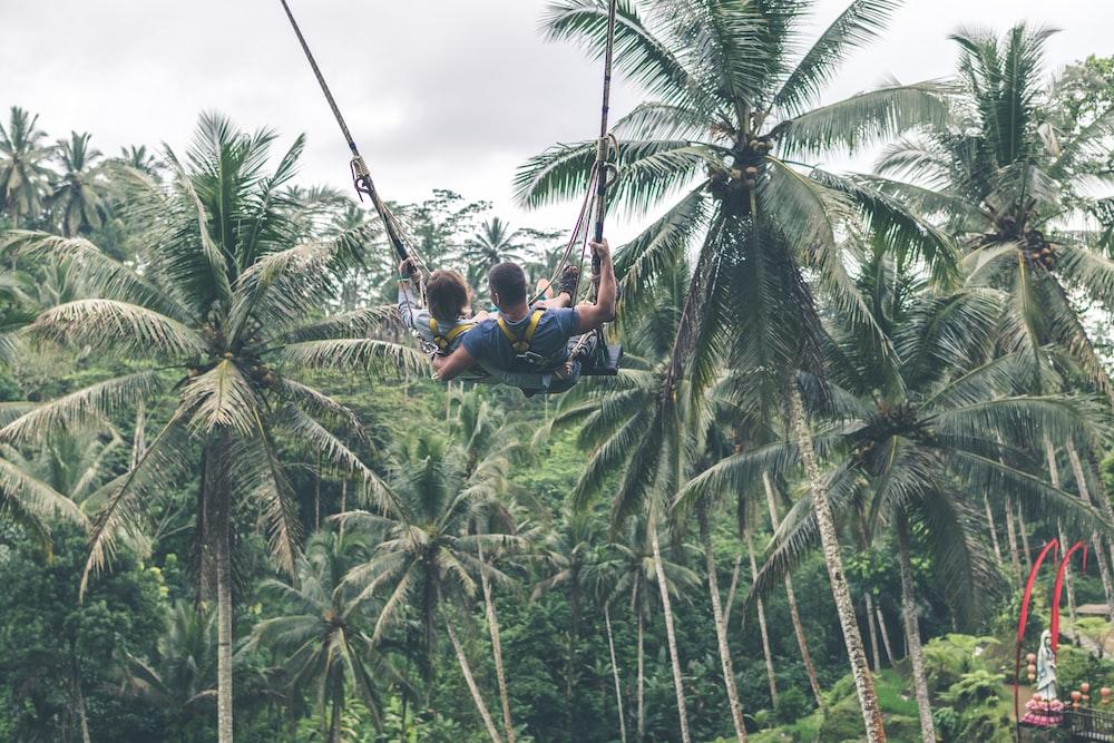 people zip lining near coconut trees