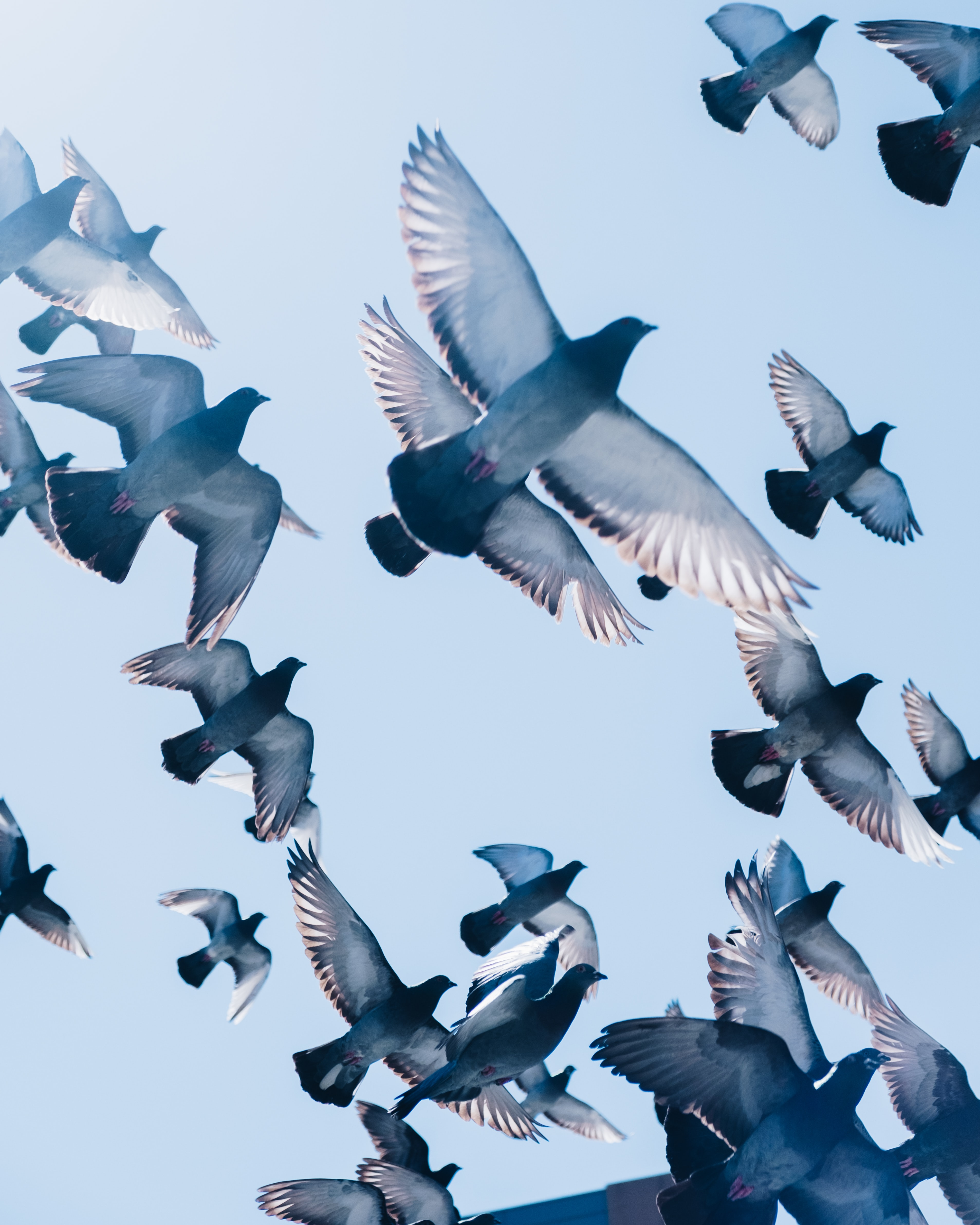 gray pigeons flying under blue sky