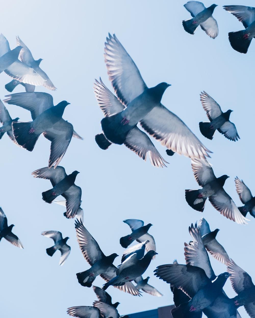 gray pigeons flying under blue sky