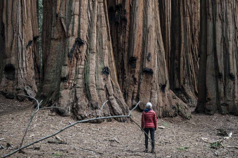 person standing in front of tree