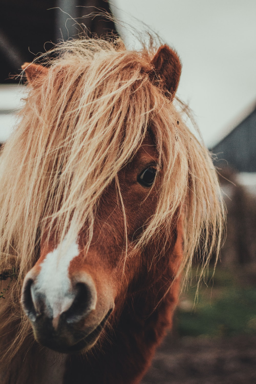 brown horse closeup photograpy