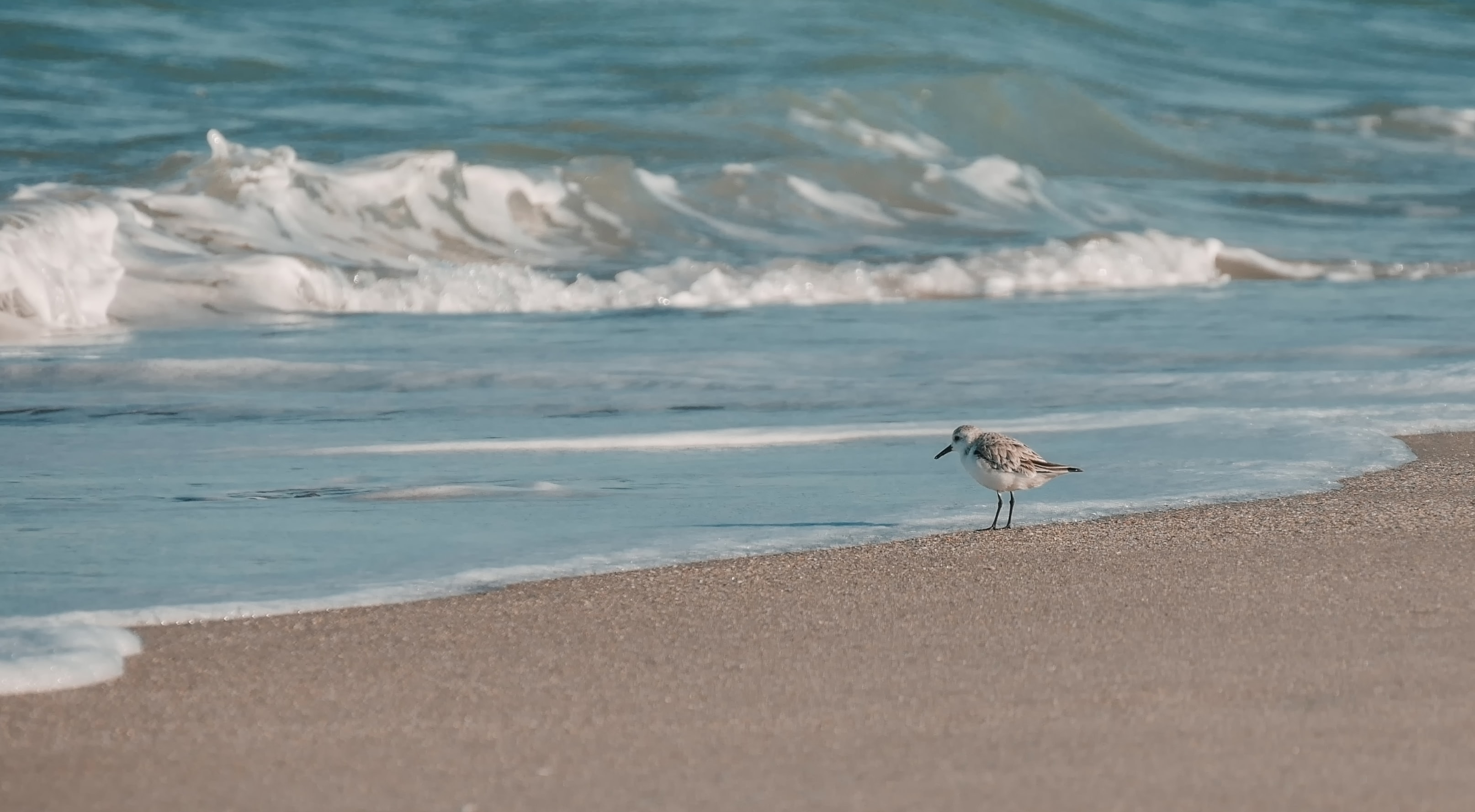 white bird perch on gray sands beside a body of water