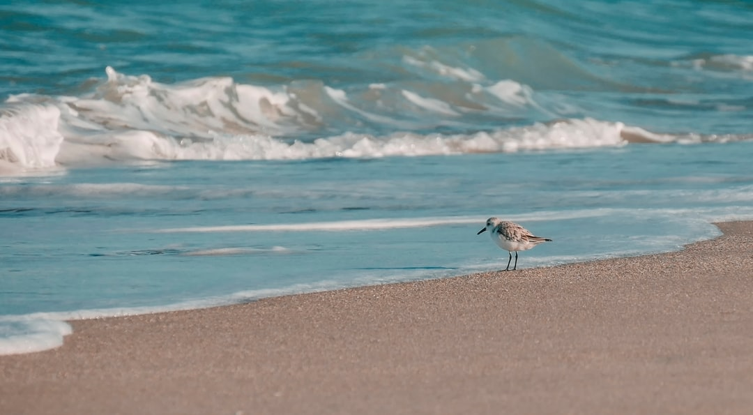Sandpiper and his decisions