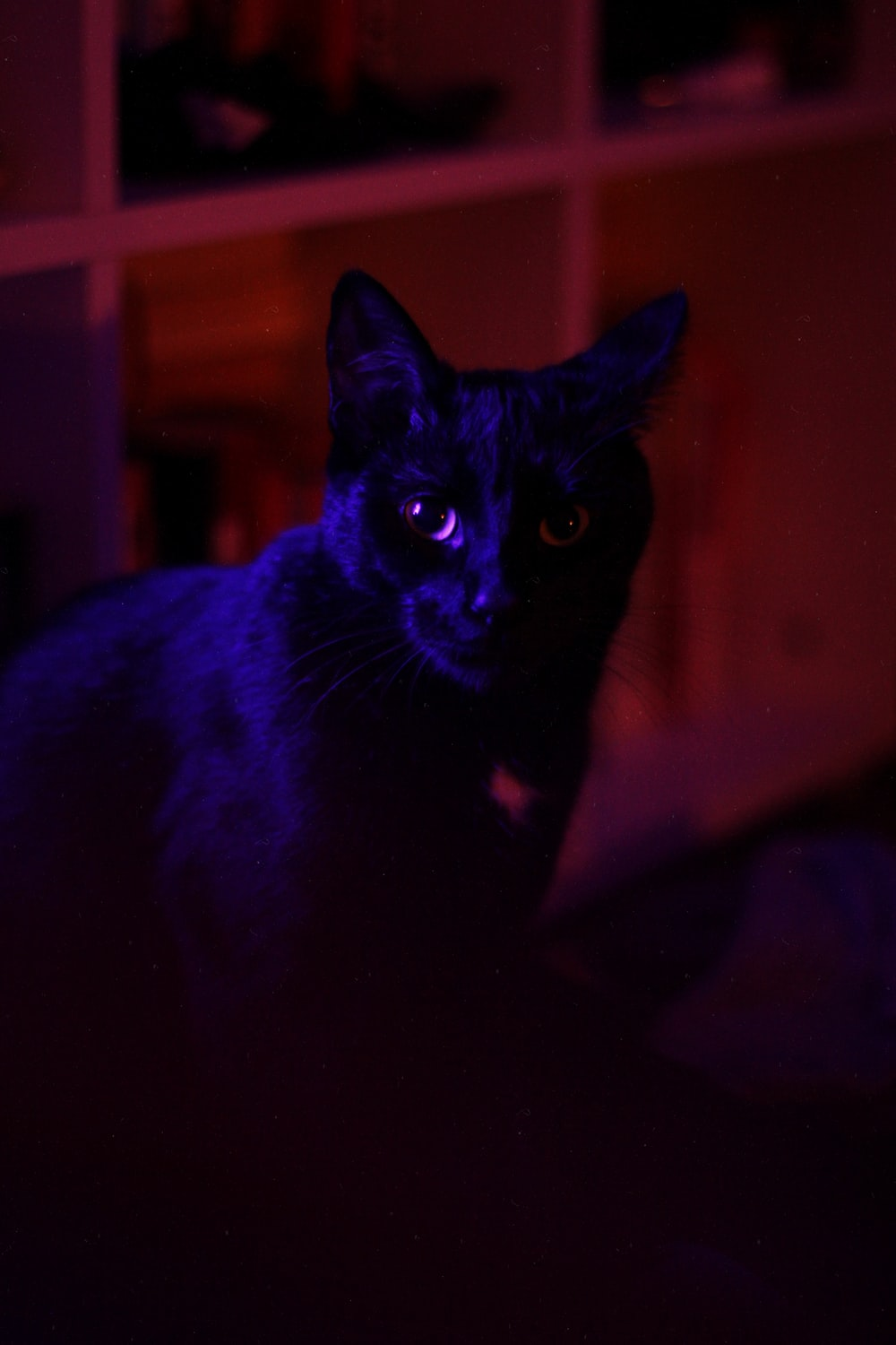 selective focus photography of black cat