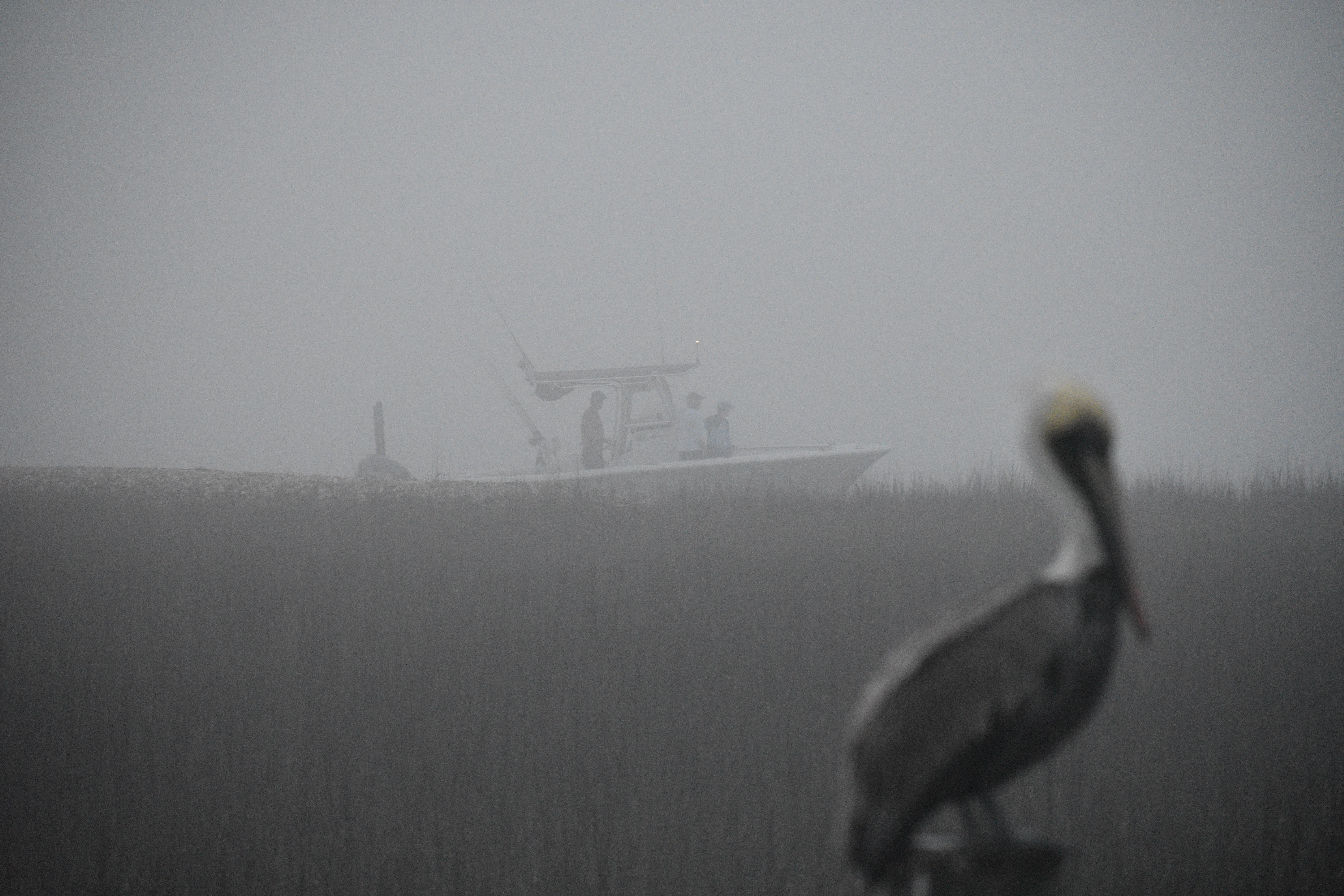 white and gray bird standing on pole near white motorboat