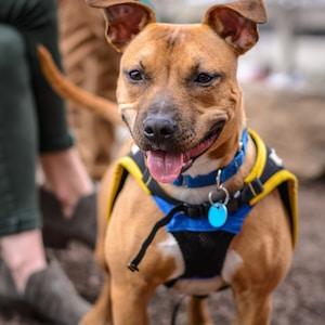 tilt shift photography of short-coated brown dog