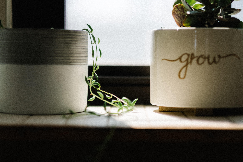green leafed vine plant beside white pot near window
