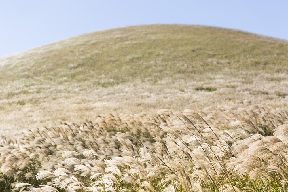 white grass covered hill