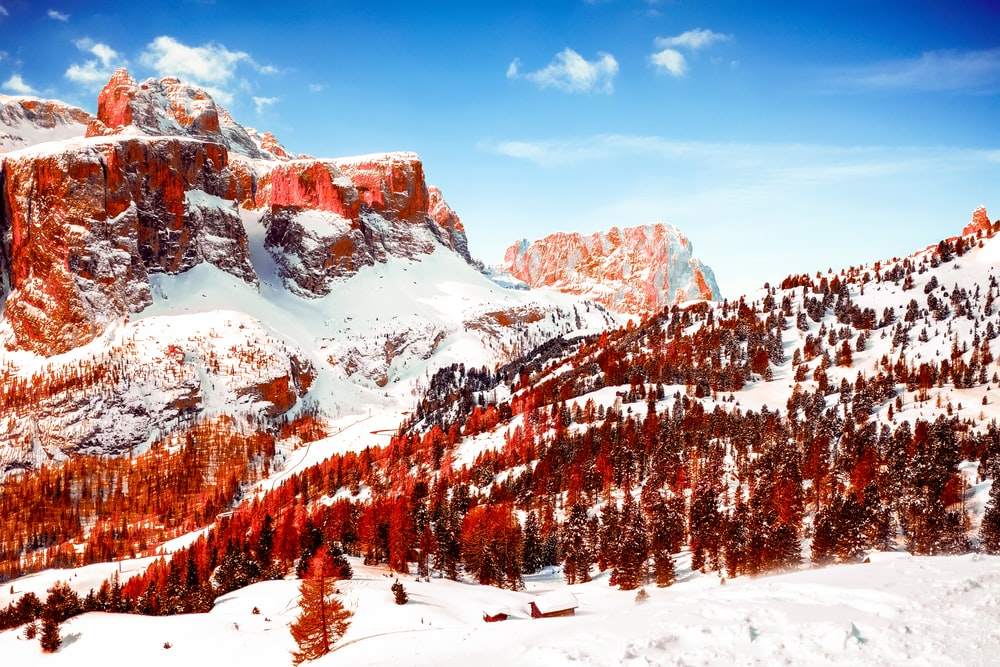 snow capped mountains and red leaf trees at daytime