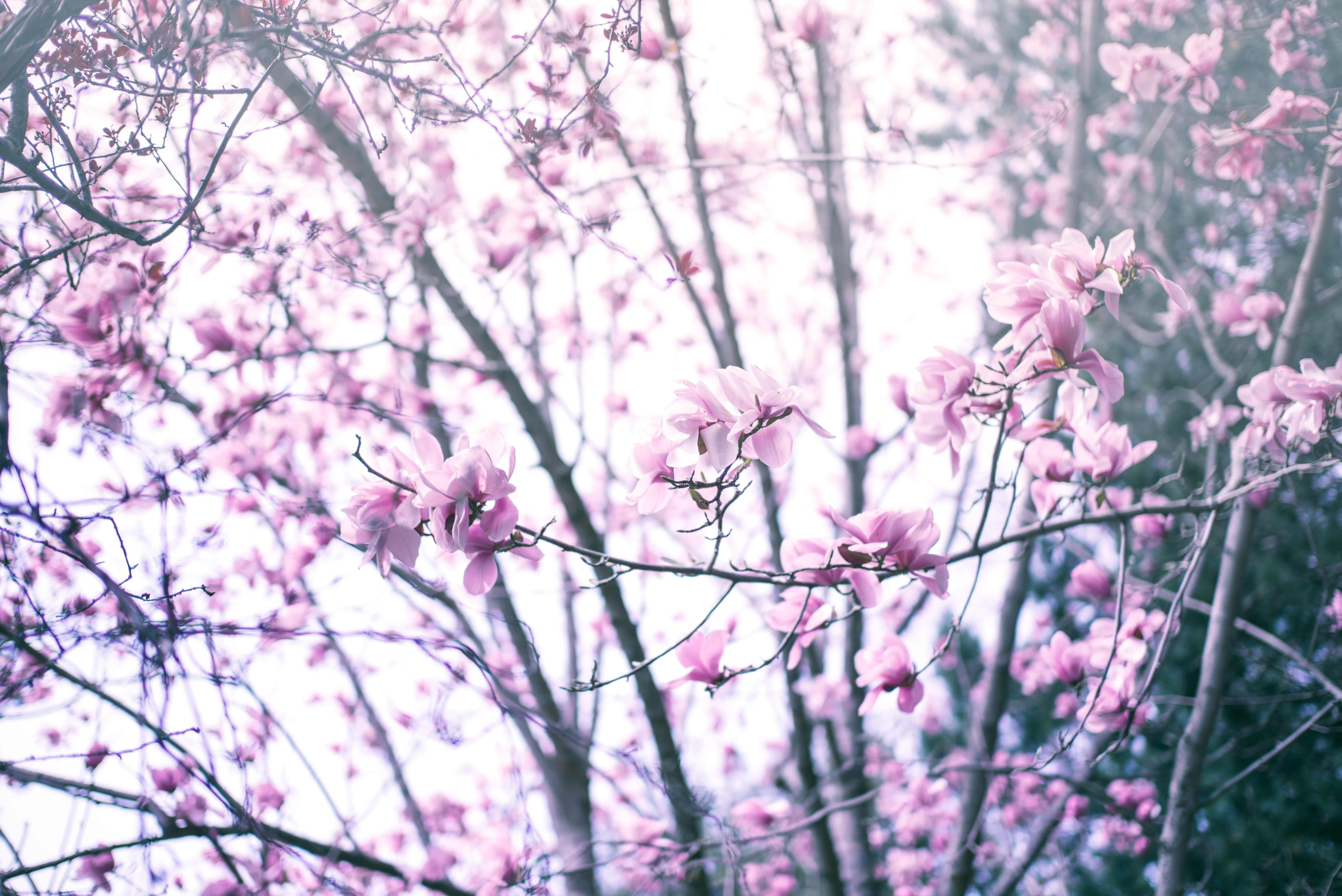 pink petaled flowers at daytime