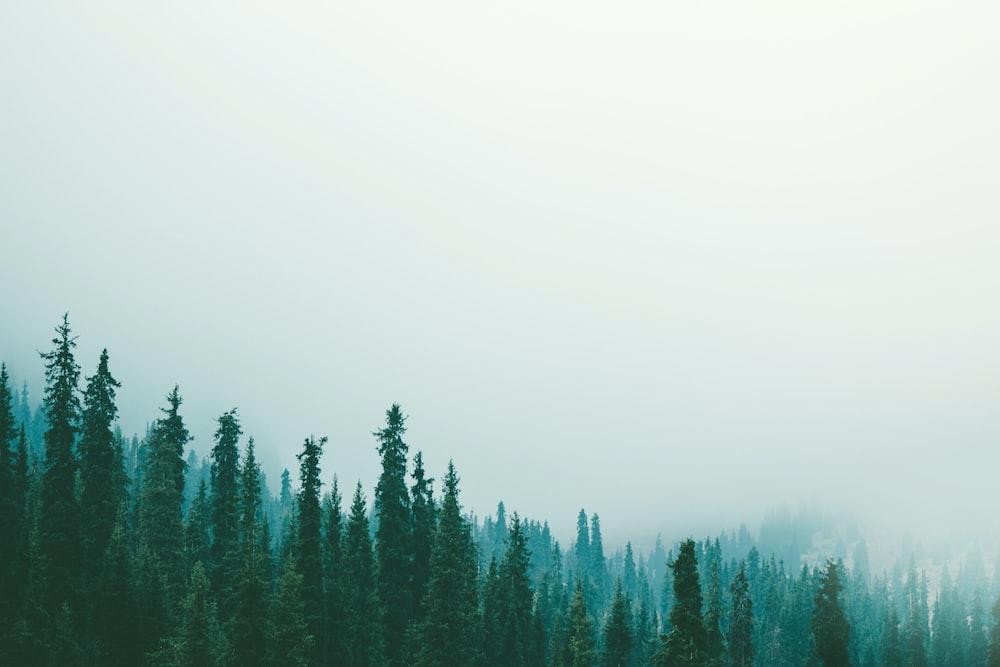 white fogs on green tree