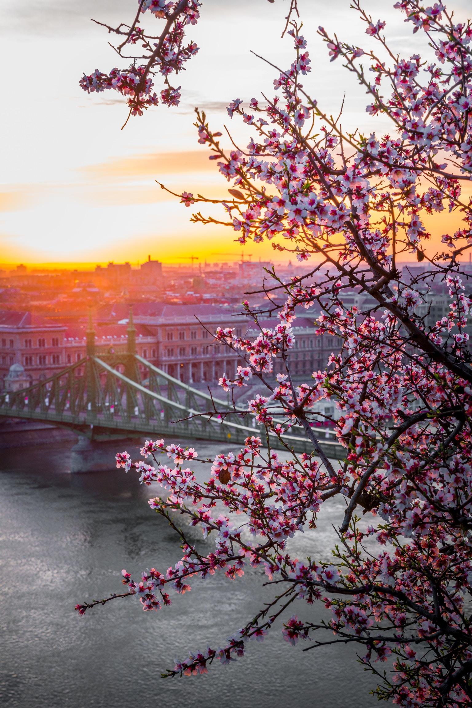 landscape photography of bridge