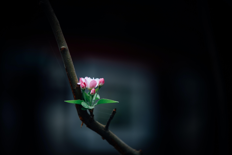 selective focus of pink petaled flower